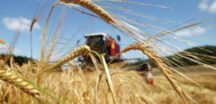Лукашенко: сельский труд лежит в основе жизни и независимости государства