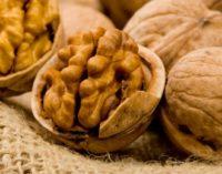Euronews рассказал о самом большом ореховом саде в Молдове