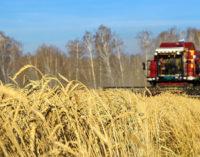 Приангарье планирует поставлять в Китай до 40 тысяч тонн пшеницы в год