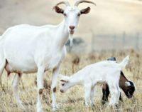 Животные, погибшие при перевозке в Казахстан, были застрахованы