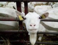 Зачем на ферме в Дзержинском районе хотят использовать ЭКО-технологии