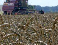Регионы Сибири намерены создать консорциум зернового экспорта