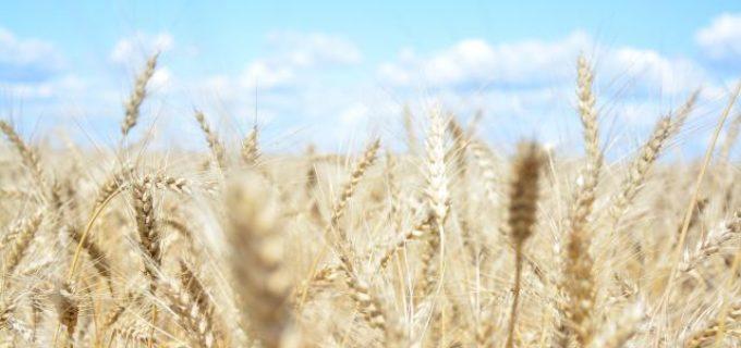 Власти Хабаровского края готовы развивать сельское хозяйство в регионе