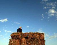 7,7 млрд рублей направят на поддержку воронежских аграриев