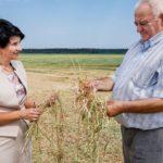 Как в регионах преодолевают последствия засухи