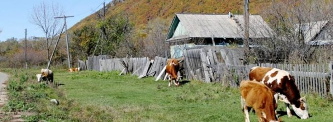 В Приморье рухнуло сельское хозяйство
