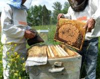 Россельхознадзор рассказал о причинах массовой гибели пчел