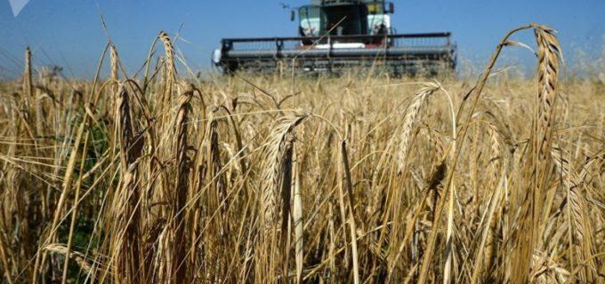 В Беларуси собрали первый миллион тонн хлеба