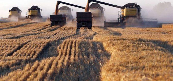 Банковские гарантии исключили из правил аренды земель сельхозназначения