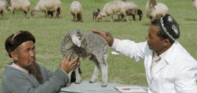 В Узбекистане создадут фонд для поддержки и развития каракулеводства