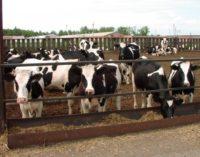 Крупным мясным предприятиям Хабкрая будут давать землю без торгов