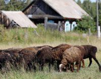 На поддержку фермеров Красноярского края направят более ₽50 миллионов