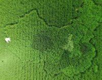 Новосибирская область подготовила программу развития сельских территорий