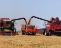 В Сибири соберут 14,5 млн тонн зерновых