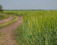 В Узбекистане планируют полностью изменить систему выделения земель фермерам и дехканам