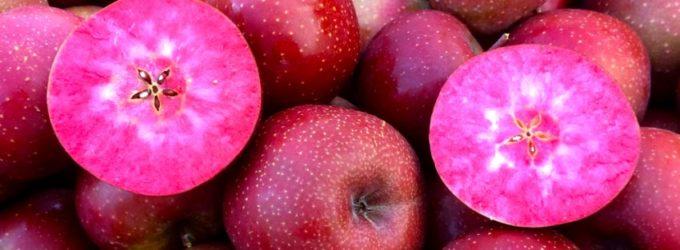 Яблоки с красной мякотью – новый суперпродукт