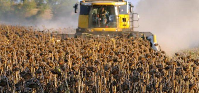 В России собран рекордный урожай масличных