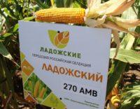 У нас передовая генетика кукурузы, для аграриев –  лучшие гибриды