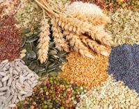 Нужны амбициозные планы по развитию семеноводства