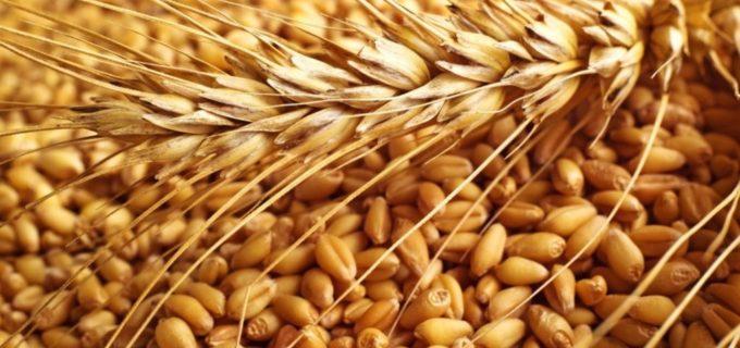Американская пшеница – для «прогресса Грузии»