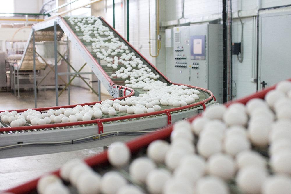 Экспорт яичной продукции из Мордовии вырастет на четверть