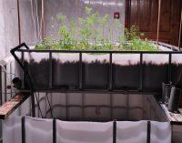 Осетров и раков можно разводить в обычной квартире на кухне