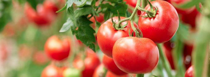 Картофеля и овощей в России вырастят больше