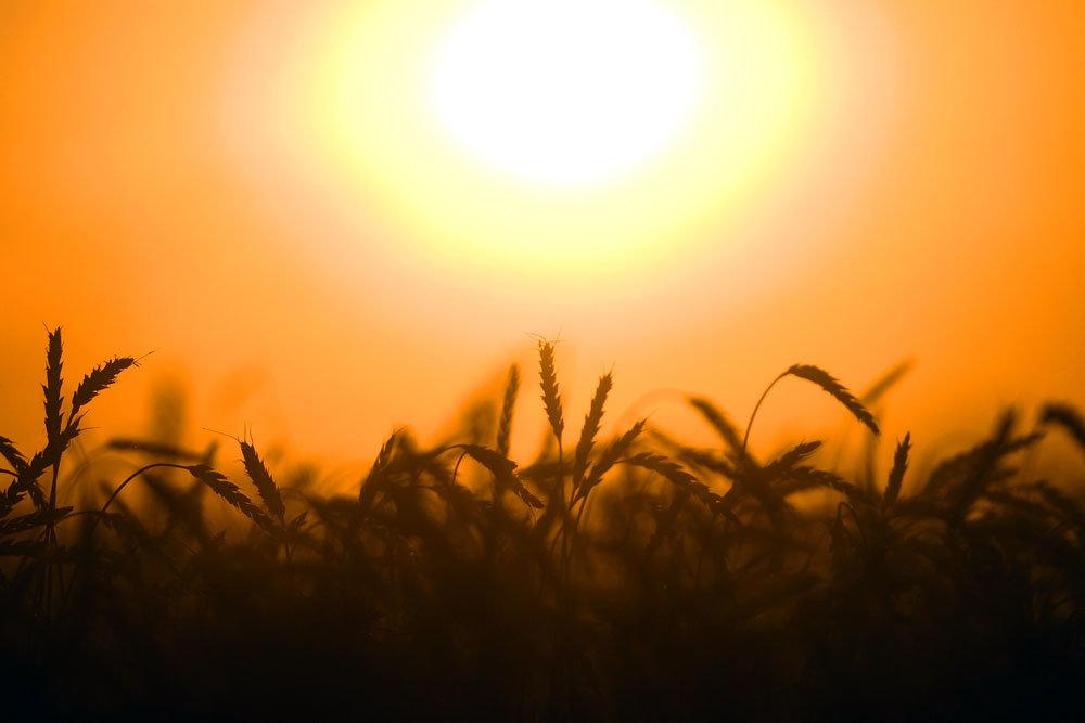 Зерно заменит нефть