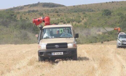 Борьба с итальянской и марокканской саранчой в Восточной Грузии