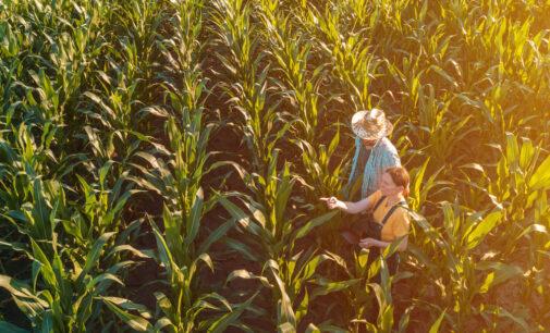 Фермер глядит на запад