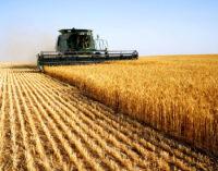 Минсельхоз сохранил прогноз по урожаю зерновых на уровне 122,5 млн тонн