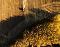 По курсу пшеницы