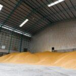 Свыше 500 тыс. тонн зерна собрано в Красноярском крае