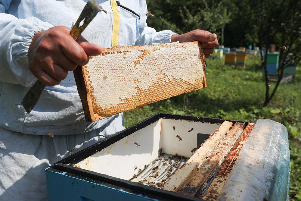 Там, где медом намазано