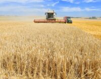 В Красноярском крае намолочено 2,8 млн. тонн зерна