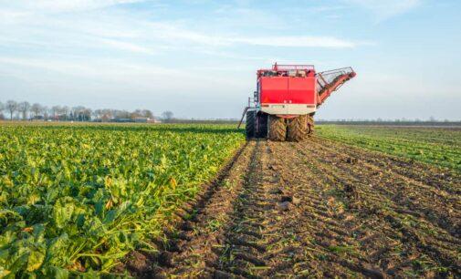 Сахарную свеклу убрали с 16 тыс. га в Липецкой области