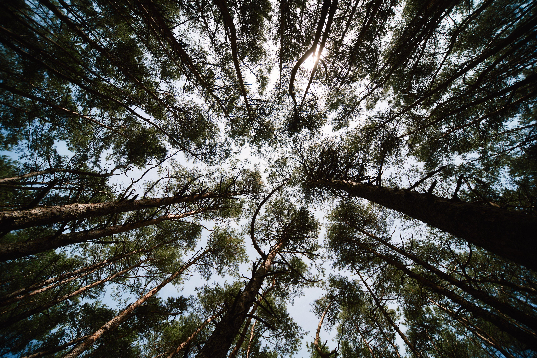 Правительство упростило правила использования заросших лесом полей