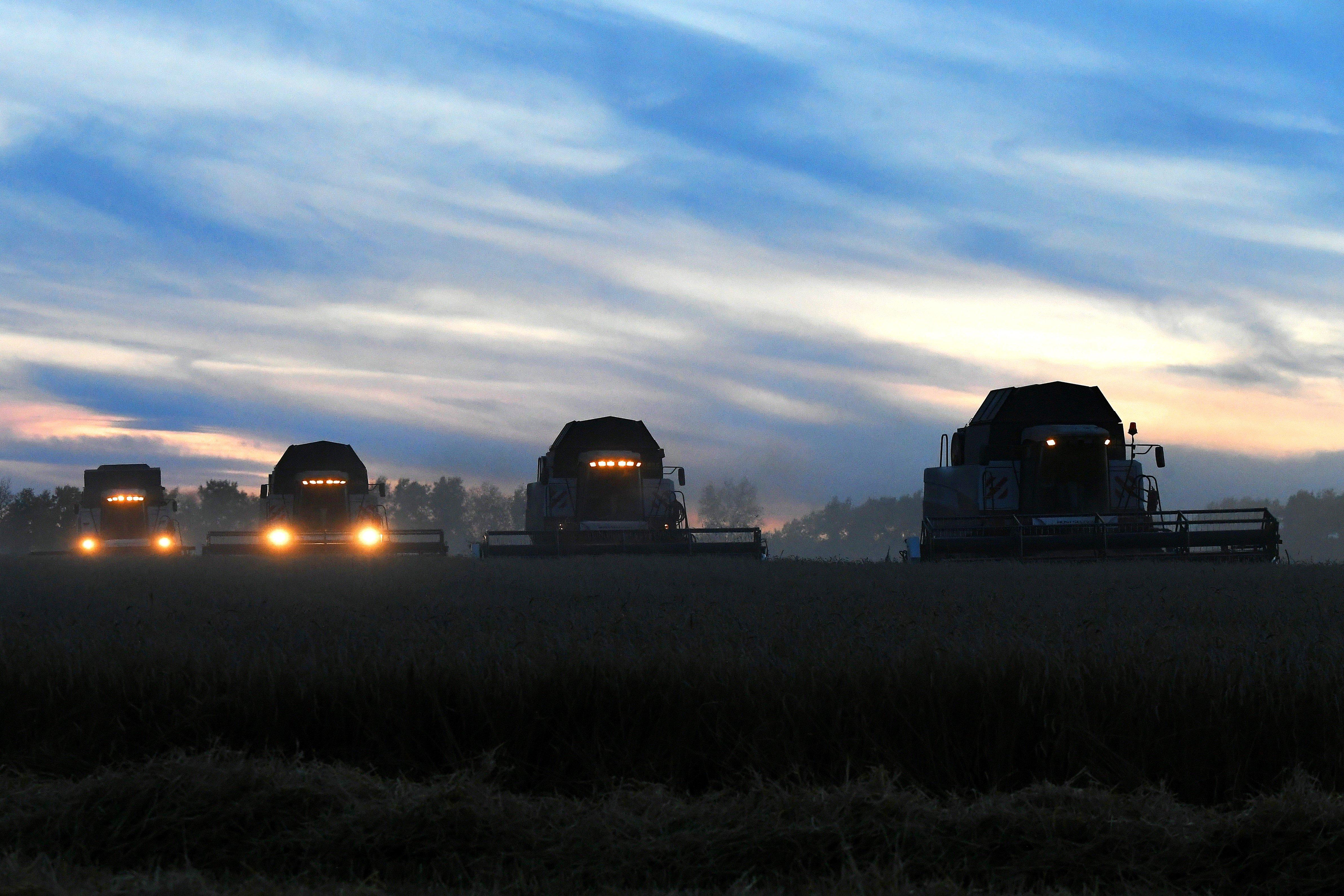 Какого урожая зерна России ждать в этом году