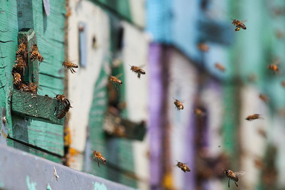 Меняются правила разведения пчел