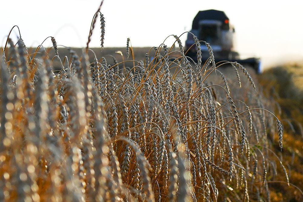Подкомиссия по тарифам одобрила повышение пошлины на пшеницу с 1 марта