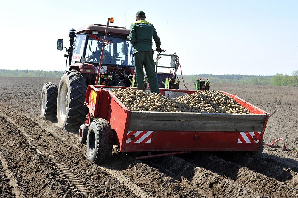Белорусский картофель высадят в питомниках Приморья