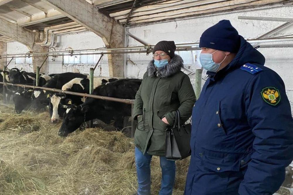 Юрист рассказал, что грозит владельцам фермы, где коров довели до истощения