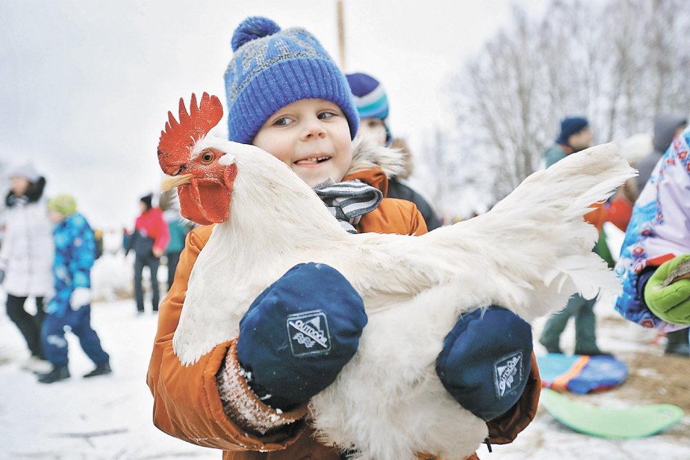 Курица в заморозке