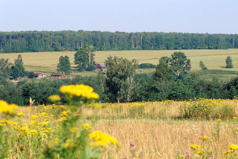 Абрамченко рассказала о планах правительства по лесу на сельхозземлях
