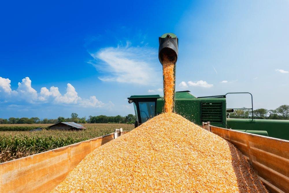 Осенью производителей зерна ждет разочарование