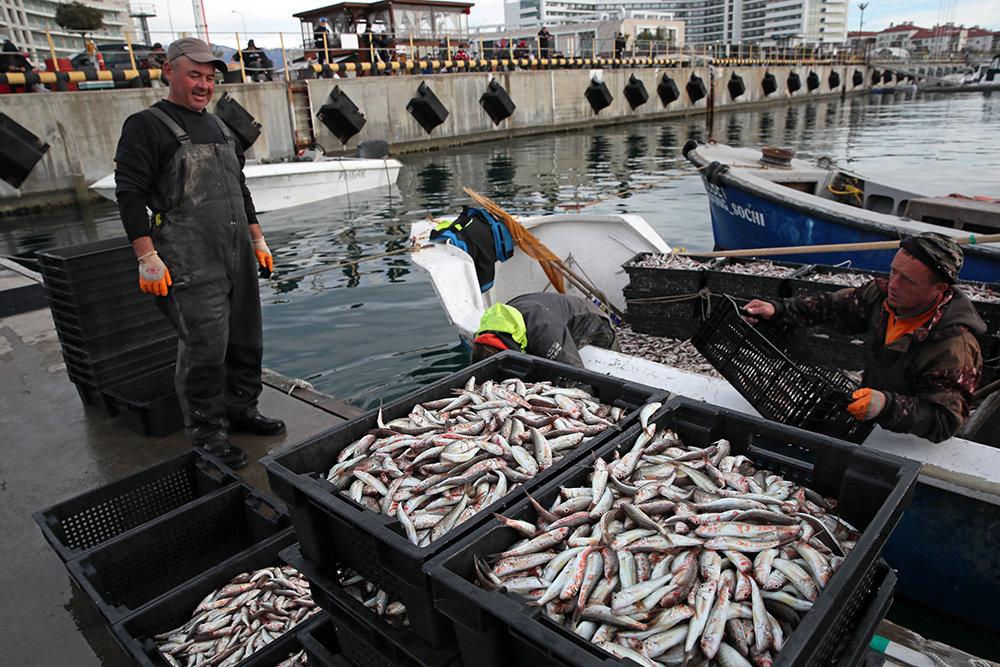 Правительство утвердило дополнительные меры поддержки рыбного промысла