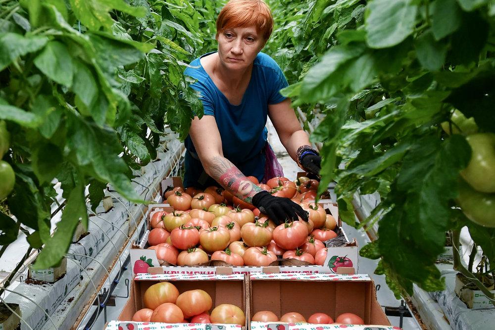 РФ может войти в топ-10 мировых экспортеров продовольствия к 2030 году