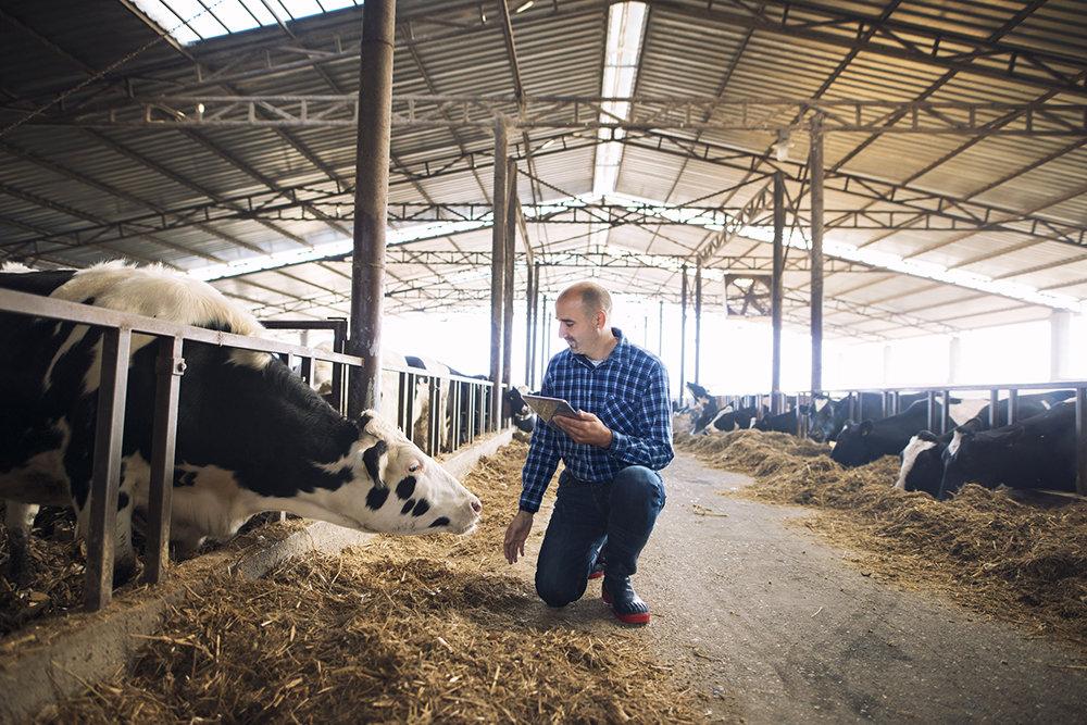 В Росстате рассказали о задачах сельхозпереписи 2021 года
