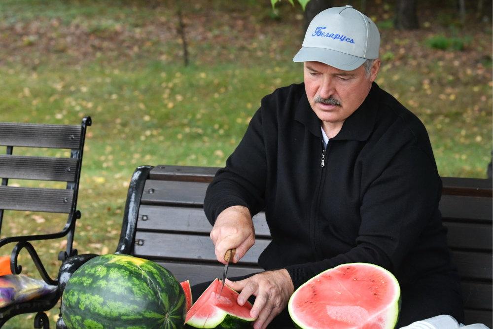 Зачем Лукашенко разводит арбузы на приусадебном участке