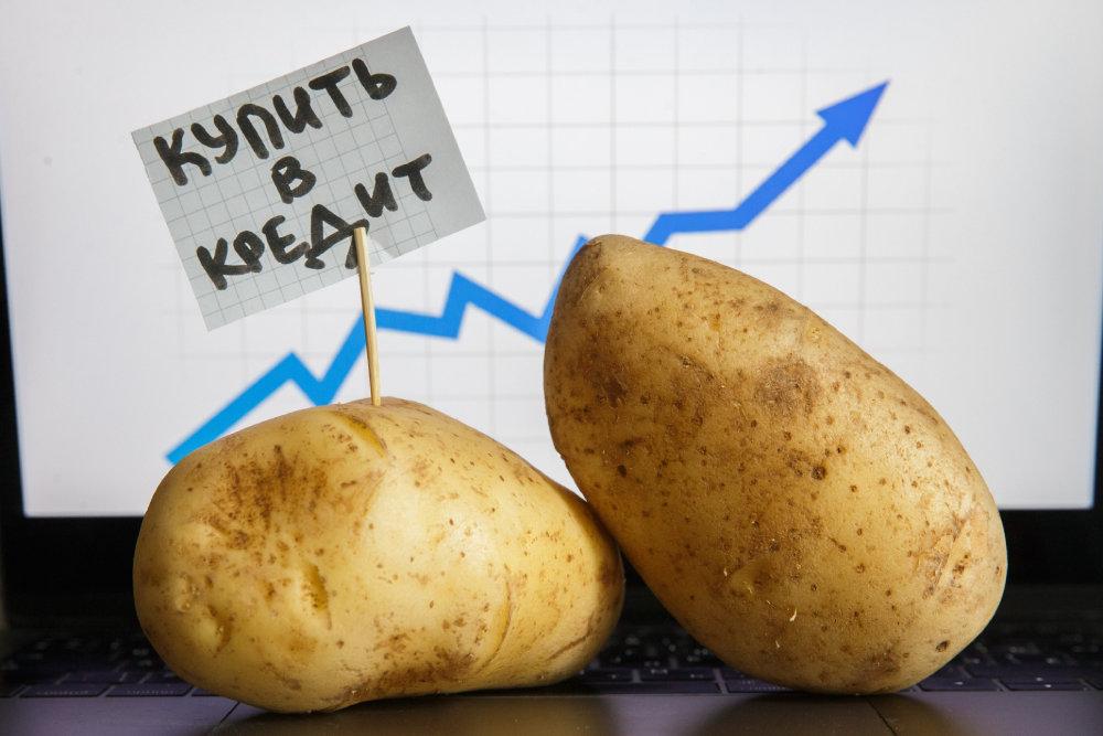 Крупной картошки в этом году будет меньше обычного